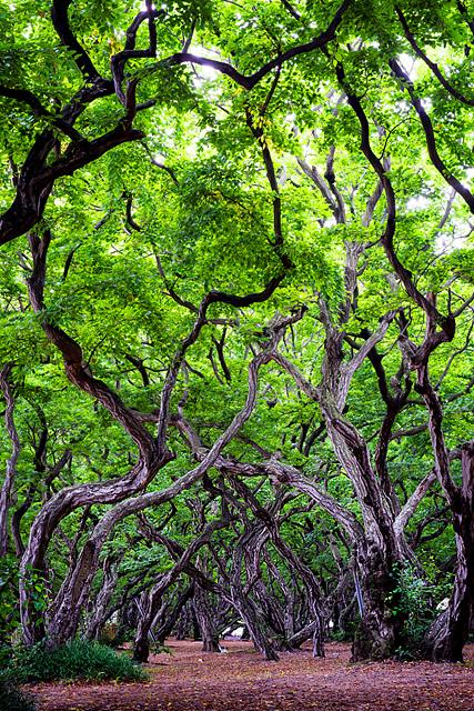 홍갑표-소사나무 숲.jpg