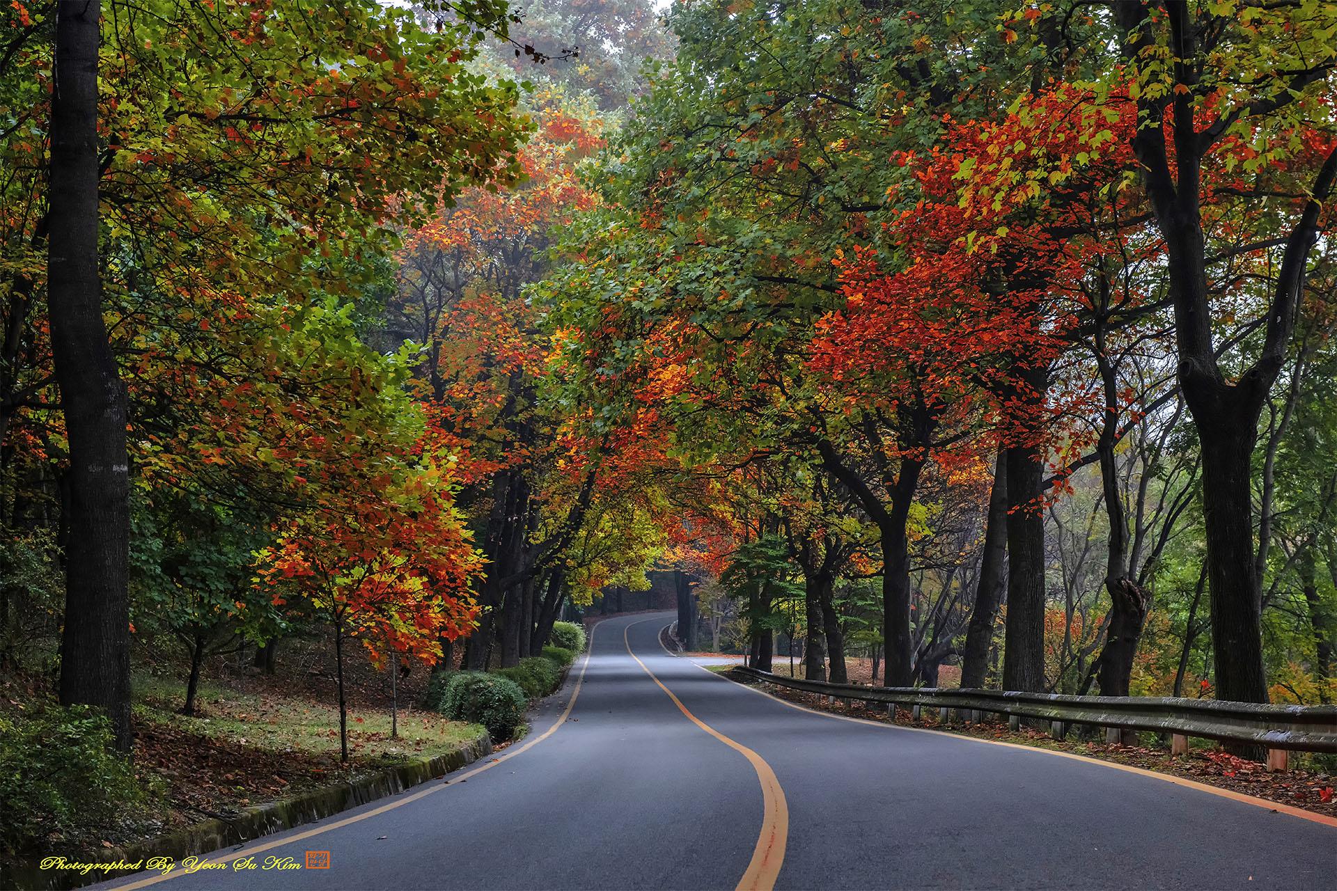 가을 길 선3628-5.jpg